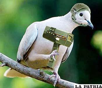 Narcos utilizan a las palomas para sus fines ilícitos