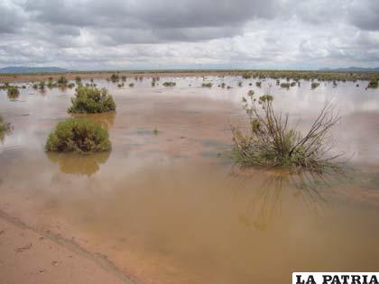 Las intensas lluvias caídas sobre el departamento de Oruro han provocado inundaciones en el agro y la pérdida de cosechas