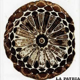 Los fósiles de las plantas estaban dentro de delgadas láminas de vidrio