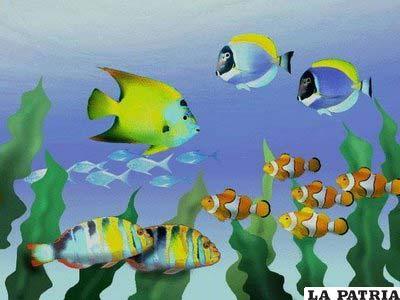 El dióxido de carbono pone en riesgo la vida de los peces en el mar