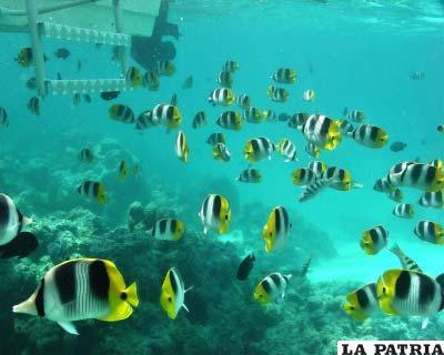 Afectará la habilidad de los peces para oír, oler, moverse y escapar