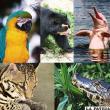 La biodiversidad del planeta está seriamente amenazada