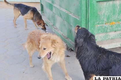 El 2012 en Oruro se registraron en 30 casos de rabia canina