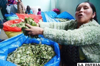 Diplomático: Debe tomarse con responsabilidad el asunto de la coca