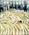 Las tiendas de Tailandia venden de manera ilegal toneladas de colmillos procedentes de elefantes africanos