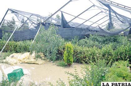 Cultivos de diferentes productos quedaron dañados por efecto de las lluvias
