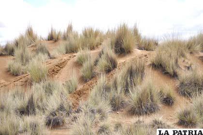 En la zona Norte, todavía se mantienen las dunas de arena