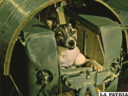 Laika fue el primer animal que viajó al espacio