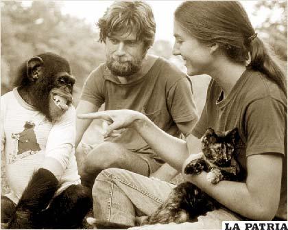 Nim Chimpsky, la máxima estrella de un experimento sobre lenguaje animal