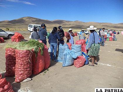 Las afectaciones en el campo agropecuario no son de gran magnitud en el municipio de Poopó