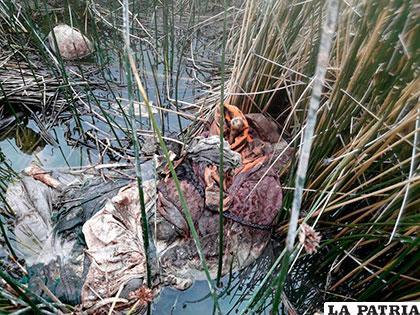 Los restos de la anciana fueron hallados en medio de los totorales y el agua