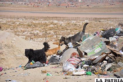Canes esparcen la basura que dejan los vecinos en las calles