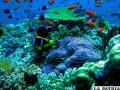 Las reservas marinas más importantes del planeta