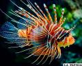 Los tres peces más coloridos del planeta
