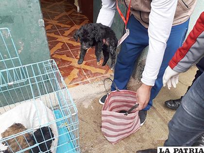 Canes eran maltratados y vendidos en bolsas de mercado /Cemzoor