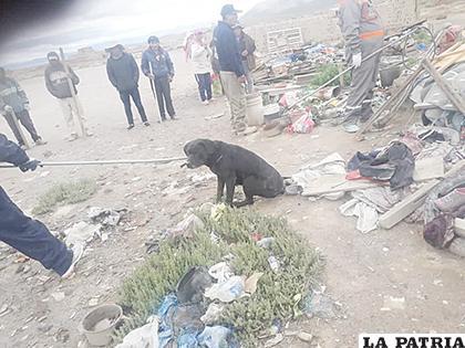 Uno de los perros capturados recientemente en el sector de las Ladrilleras /LA PATRIA