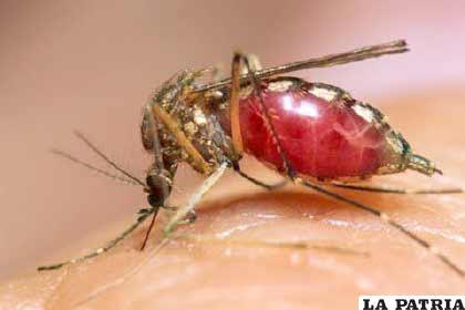El dengue hace estragos en Latinoamérica