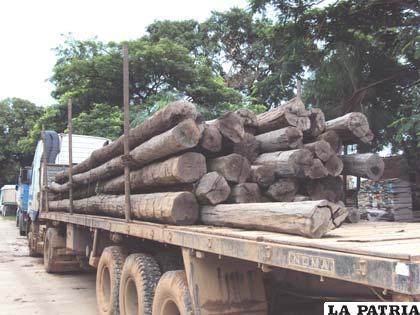 Tala ilegal merma los bosques