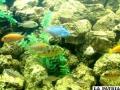 Exóticos peces adornan al  moderno acuario de Oruro
