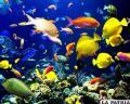 Conservar la biodiversidad permite el equilibrio en la naturaleza