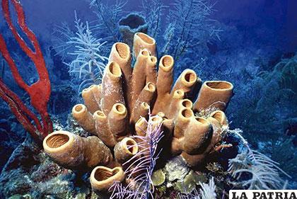 Las esponjas de mar datan de hace aproximadamente 760 millones de años