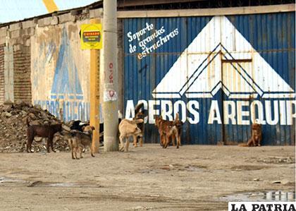 Pese a las acciones, canes callejeros y vagabundos abundan en las calles