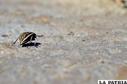 La única especie viva que se encontró durante la caminata hacia la orilla