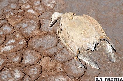Aún son evidentes las consecuencias de la sequía