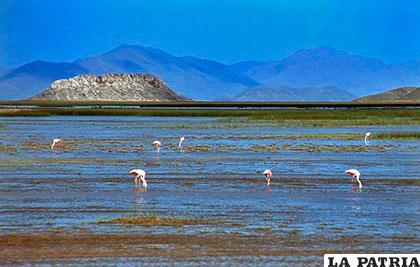 Auguran una buena pesca en el lago Uru Uru /Fides.com