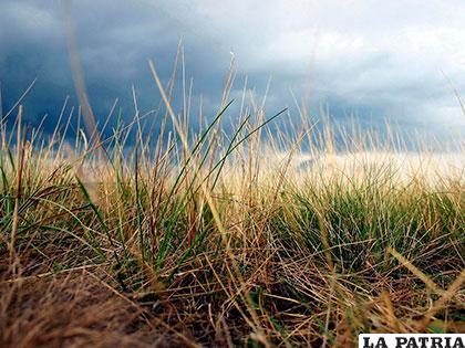 Quemar la paja brava para ahuyentar las lluvias, es una creencia /LA PATRIA archivo
