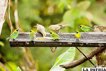 De las 312 especies distribuidas en la parte continental de Ecuador, todas se encuentran en distintas categorías de riesgo /larepublica.ec
