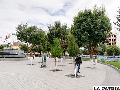 Pinos que crecen ante la mirada de los visitantes / LA PATRIA