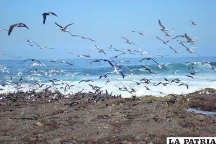 Una de las playas de Antofagasta, territorio boliviano arrebatado por Chile en 1883