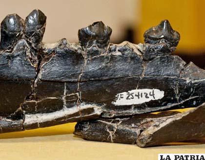 Fósiles encontrados en Canadá son los más antiguos de cualquier miembro de este grupo