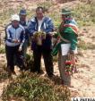 Productores de Totora muestran cultivos de papa que fueron afectados por helada