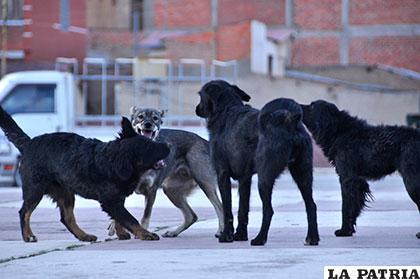 De los 17 casos de rabia, 13 son de canes