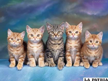 Los gatos son mascotas, expuestas a diversas enfermedades