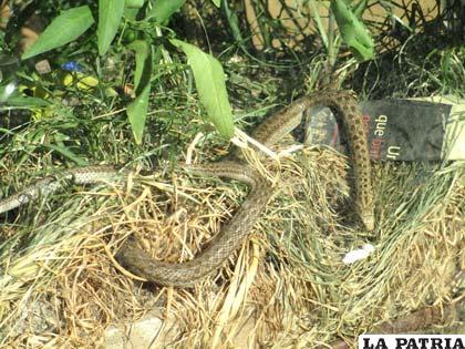 Las culebritas son animalitos diurnos que comen insectos grandes y pequeños