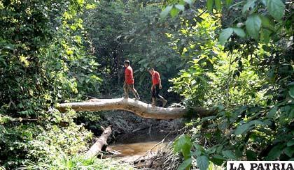 Una de las mayores papeleras del mundo quiere evitar la tala de árboles