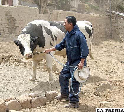Con el funcionamiento de la granja de Huancaroma se pensaba mejorar producción lechera