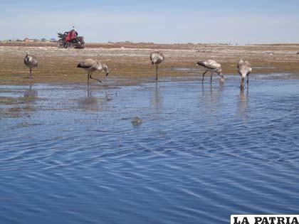 Se reduce la fauna en el lago