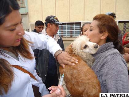 Se logró el 71 por ciento en vacunación de mascotas