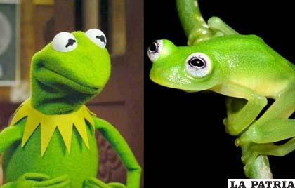 El parecido es asombroso