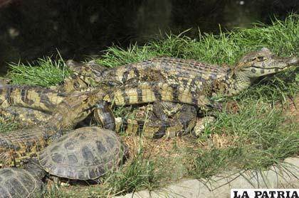 Reptiles del Zoo Municipal