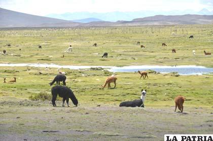 Políticas gubernamentales no condicen con el discurso de protección de la Madre Tierra