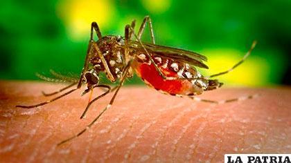 Cantidad de casos de zika es alarmante en Brasil /lanacion.com.ar