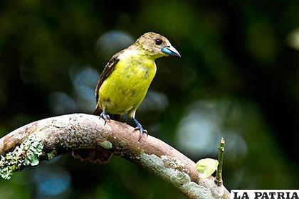 Hermosos ejemplares del Ecuador fueron capturados por la cámara de Jianguo