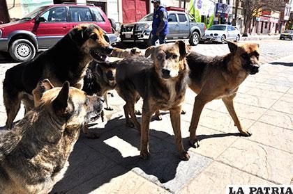 La epidemia de rabia canina se está