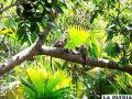 Deforestación de Amazonía peruana es 75% menor en áreas tituladas a indígenas