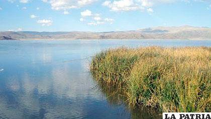 Totora en el lago Uru Uru obstruye la pesca